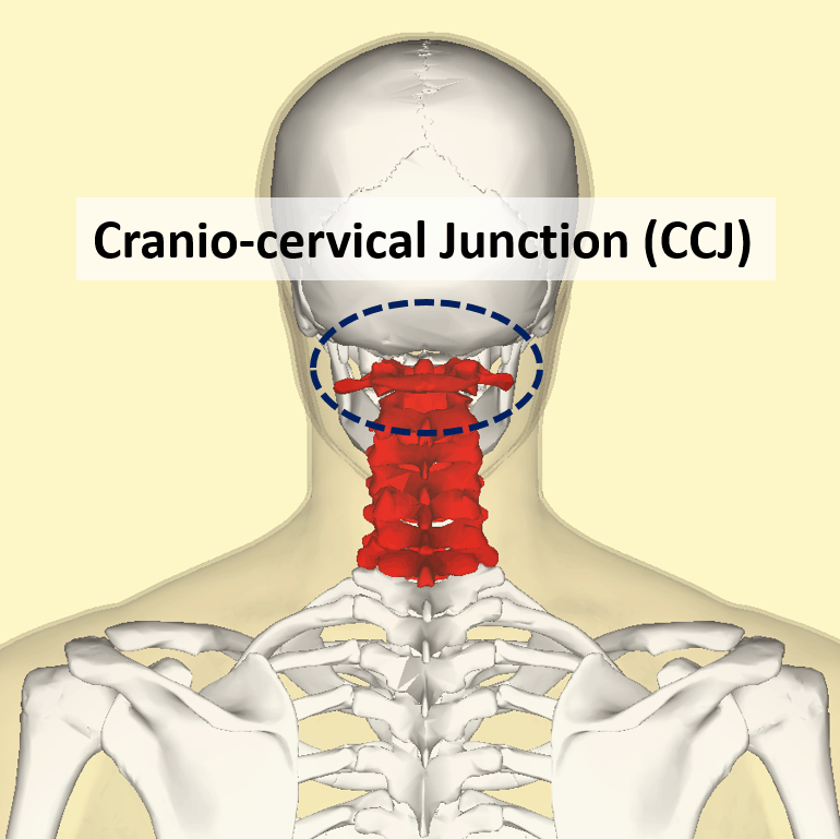 Craniocervical Junction CCJ