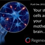 your stem cells are in your mother's brain
